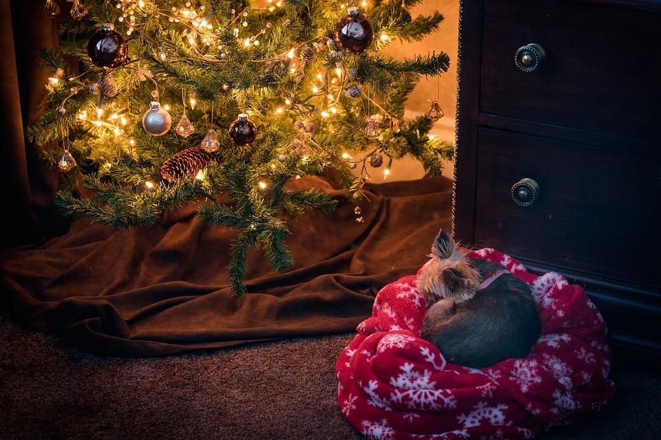 Gezellig en veilig kerst vieren met uw huisdier