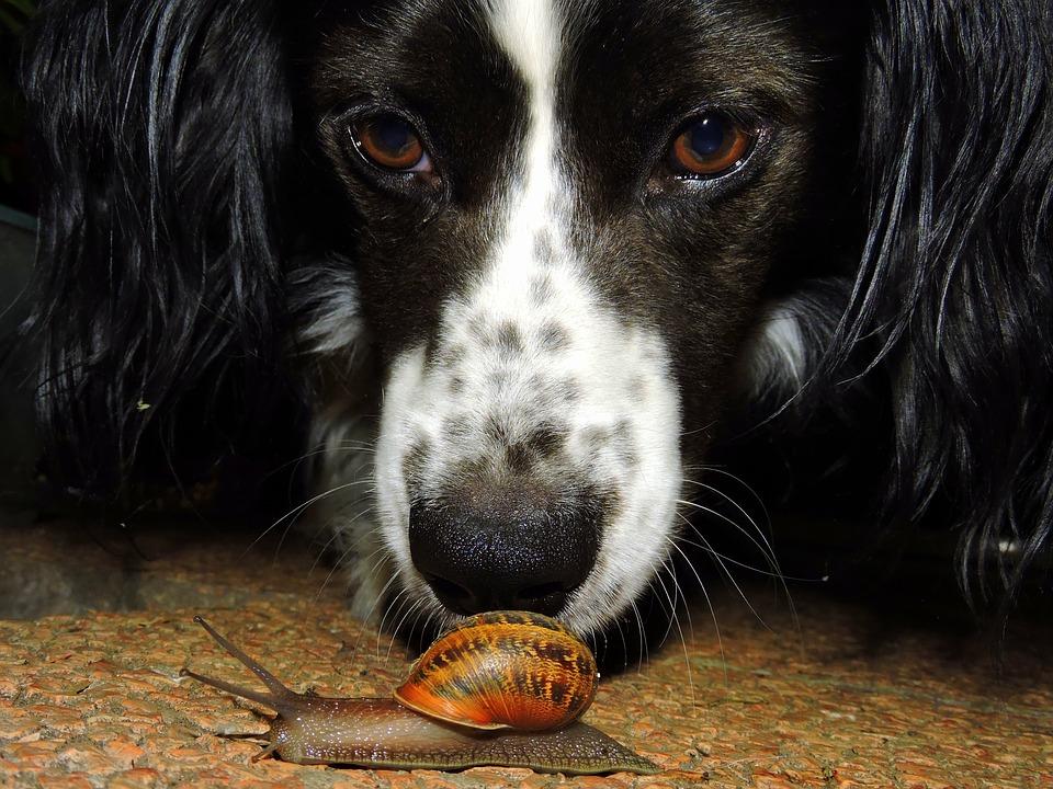 Pas op voor slakken! Gevaarlijk voor hond en kat